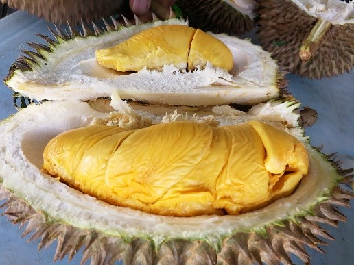 picture-by-shan-cheng-durian-penang-2